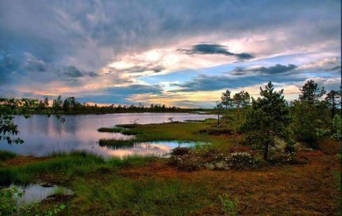 где в россии болота занимают большую площадь почему не дают займ онлайн на карту