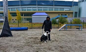 В Ханты-Мансийске появилась бесплатная площадка для дрессировки собак